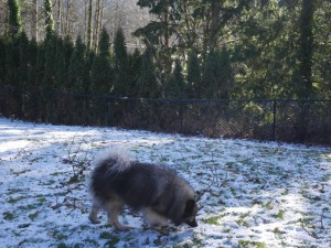 Resort at the Mountain Mount Hood dog yard
