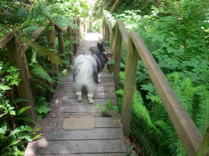 Cape Disappointment North Head Trail