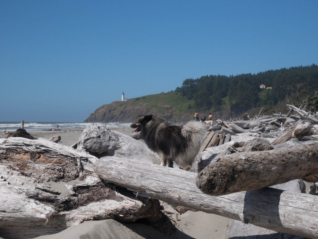 driftwood by Cape Disappointment at Long Beach