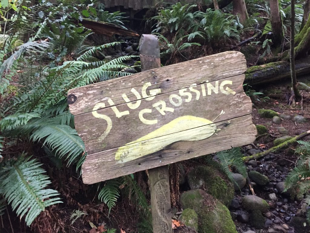 Capilano slug crossing sign