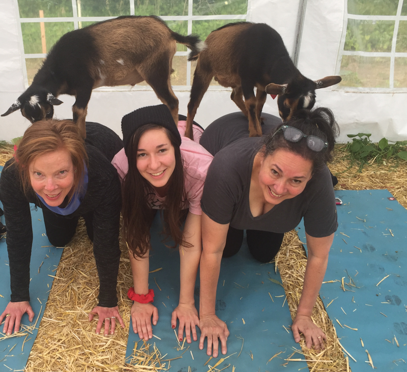 goat yoga pyramid